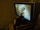 Вилька смотрит новости