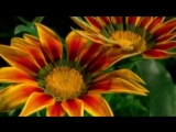 Liberta-Al--Bano--i--Romina--Power--pesnia--muzyca--covo--scscscrp