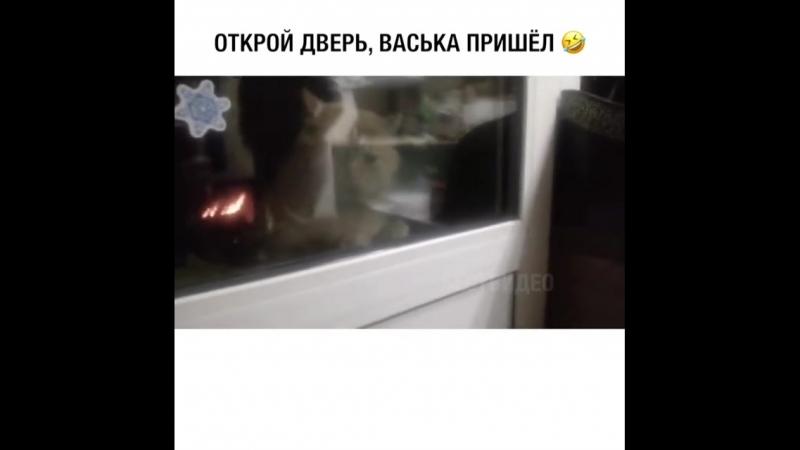 ВАСЬКА ПРИШЕЛ.