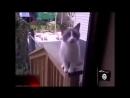 Аллах акбар кот вахабист взорвал дом