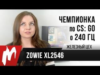Чемпионка мира по CS:GO о 240 Гц — Zowie XL2546 — Железный цех — Игромания ОБНОВЛЕНО