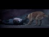 Трогательный видеоролик - 30 Millions d'Amis Foundation