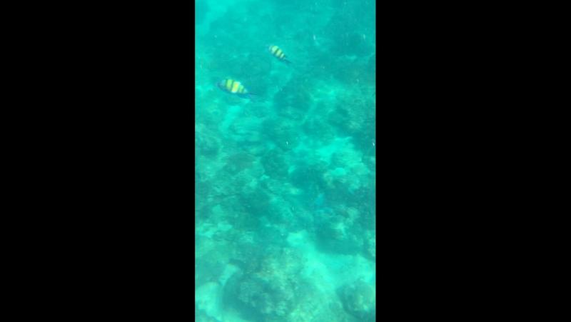 Подводный мир острова Майтон