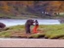 медведь переиграл в Shadou-Fite