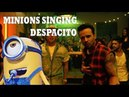 Luis Fonsi - Despacito Minions Version