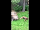 Moose Family Fast Asleep in Backyard ViralHog