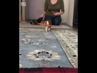 На морковном обеспечении