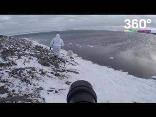Фотограф прославился благодаря белым медведям