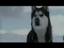 DJ Leon (Лёня Франчук)-Самый верный друг собака (ХФ Белый плен)