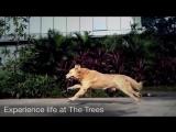 Godrej The Trees, Vikhroli Real Estate Projects In Mumbai