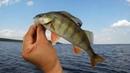 В погоне за трофеями, копчёный окунь прямо на берегу, рыбалка в Карелии!