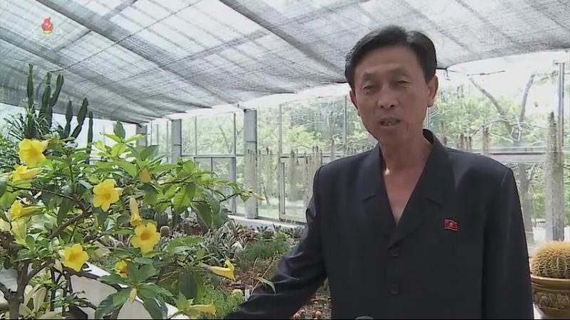 선물식물들에 비낀 위인칭송의 세계 -중앙식물원 국제친선식물관을 찾아서- 라부목