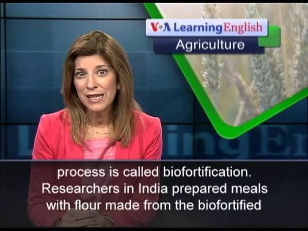 Special Grain May Reduce Iron Deficiency