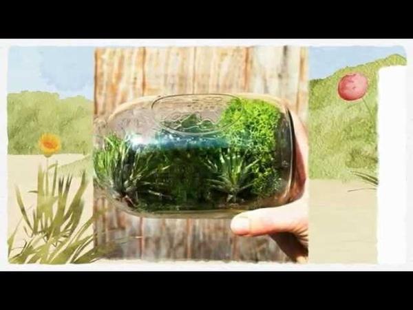 Цветы и растения в банке Креативная идея