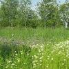 Травники , дикорастущие растения( травы).