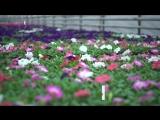 Какие цветы высадят на московские клумбы