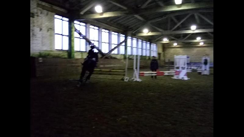 Вторые соревнования.Лошадь Вилма (до 70 см)