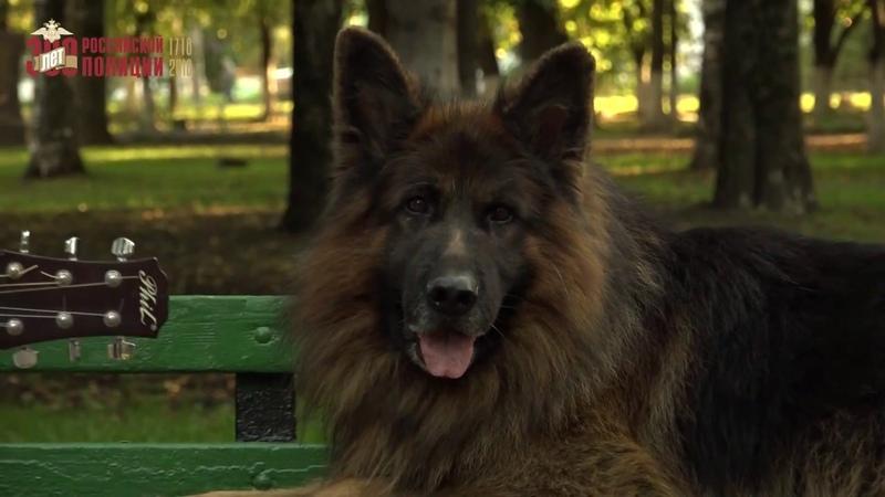 Видеоклип Человек и собака к Чемпионату МВД России по многоборью кинологов