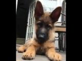 Интересный факт о собаках