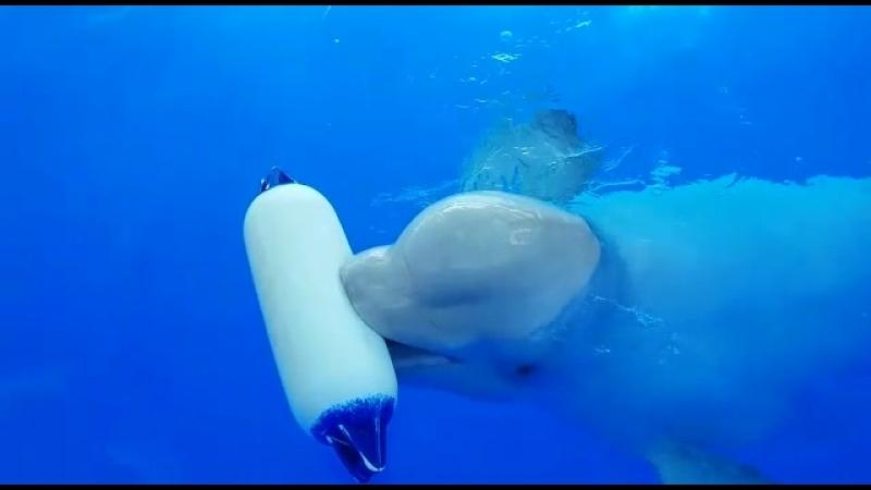 Дельфин принес сам грушку свою, поиграемся