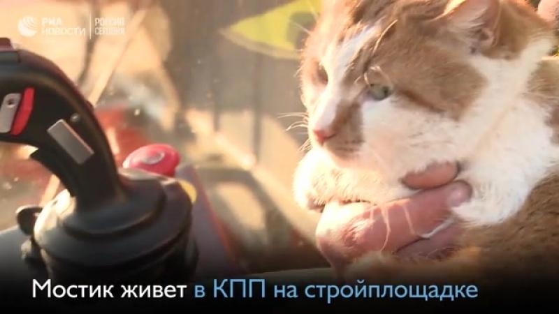 Знаменитый кот Мостик символ Крымского моста