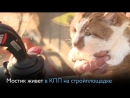 Знаменитый кот Мостик — символ Крымского моста