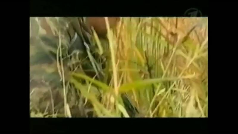 Спецназ РОСИЧ нарезки из жизни спецназа.mp4