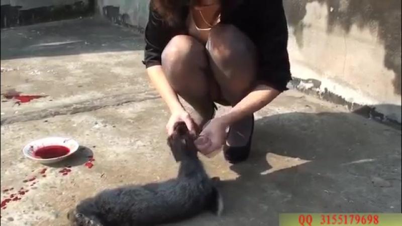 Girls slaughter the rabbit.mp4