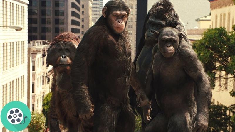 Обезьяны нападают на город Сан-Франциско. Восстание планеты обезьян (2011) год.