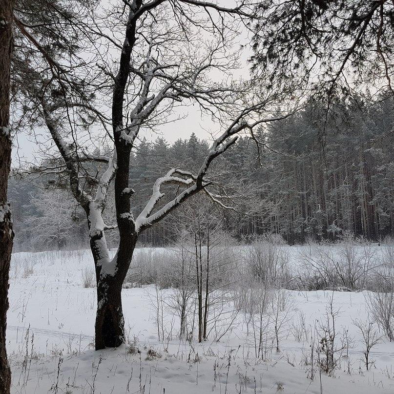 Medved Rus | Кострома