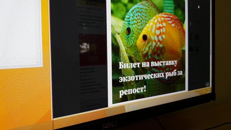 Разыгрыш 3 пригласительных билетов на двоих на выставку экзотических рыб «Подводный мир» (29.08.18)