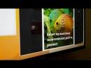 Разыгрыш 3 пригласительных билетов на двоих на выставку экзотических рыб Подводный мир 29 08 18