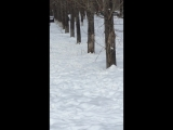 Cибирские дятлы в Новокузнецке