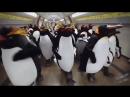 Пингвины в метро Прикольная реклама