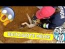 Пёсик застрял в водосточной трубе!