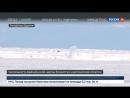 Россия 24 - Роспотребнадзор может разрешить охоту на байкальских нерп - Россия 24