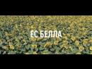 Раннеспелый гибрид подсолнечника ЕС Белла от Евралис Семанс