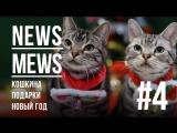 News Mews #4. Предноговогодний выпуск