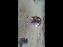 Петух на зоне возомнил себя блатным и начал бычить на вора в законе