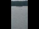 моржы купаются