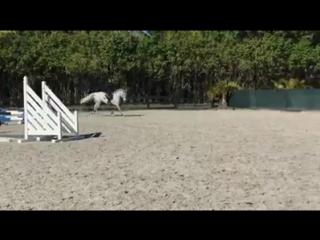 Веллингтон Джессика Мендоза Deesse Chavannais train