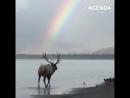 Олень гуляет на фоне радуги