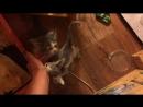мытищинские коти 7
