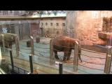Купание слоненка в Москве