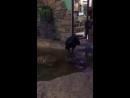 Ворон купается трогательный зоопарк Ростов