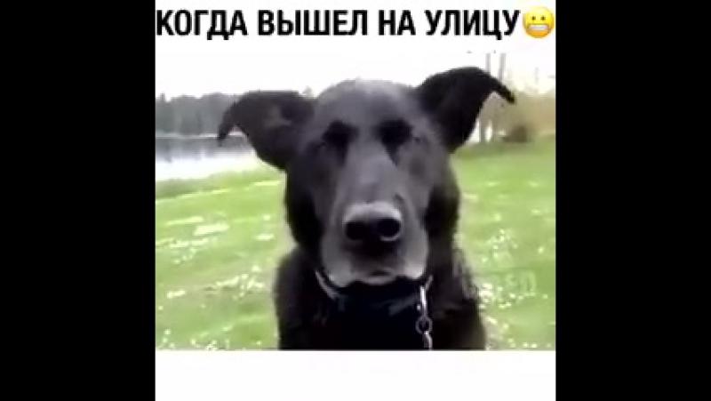 Теплота внутри пса ッ