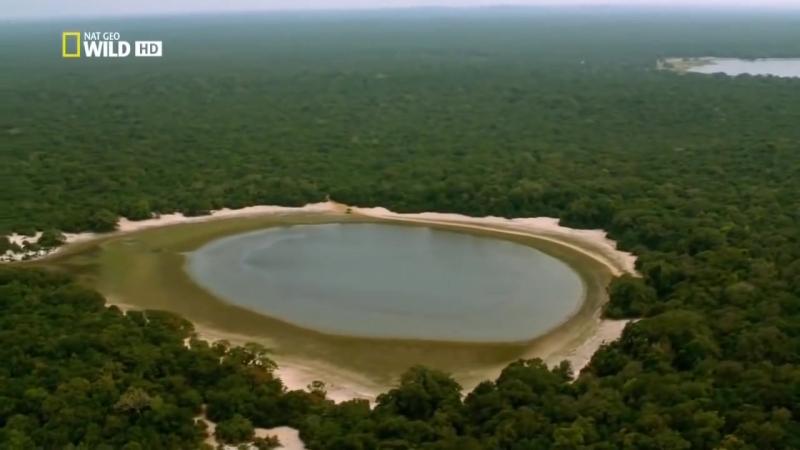 Дикая Шри Ланка. Потрясающий фильм National Geographic