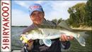 Да это лучшая Рыбалка в сезоне Ловля судака и щуки Рыбалка осенью