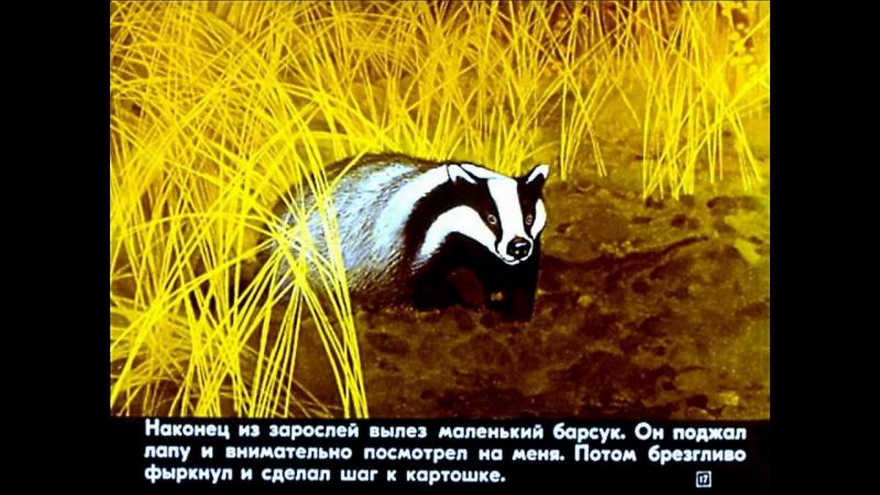 Барсучий нос К. Паустовский (диафильм озвученный) 1982 г.