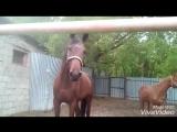 выходной у лошадок